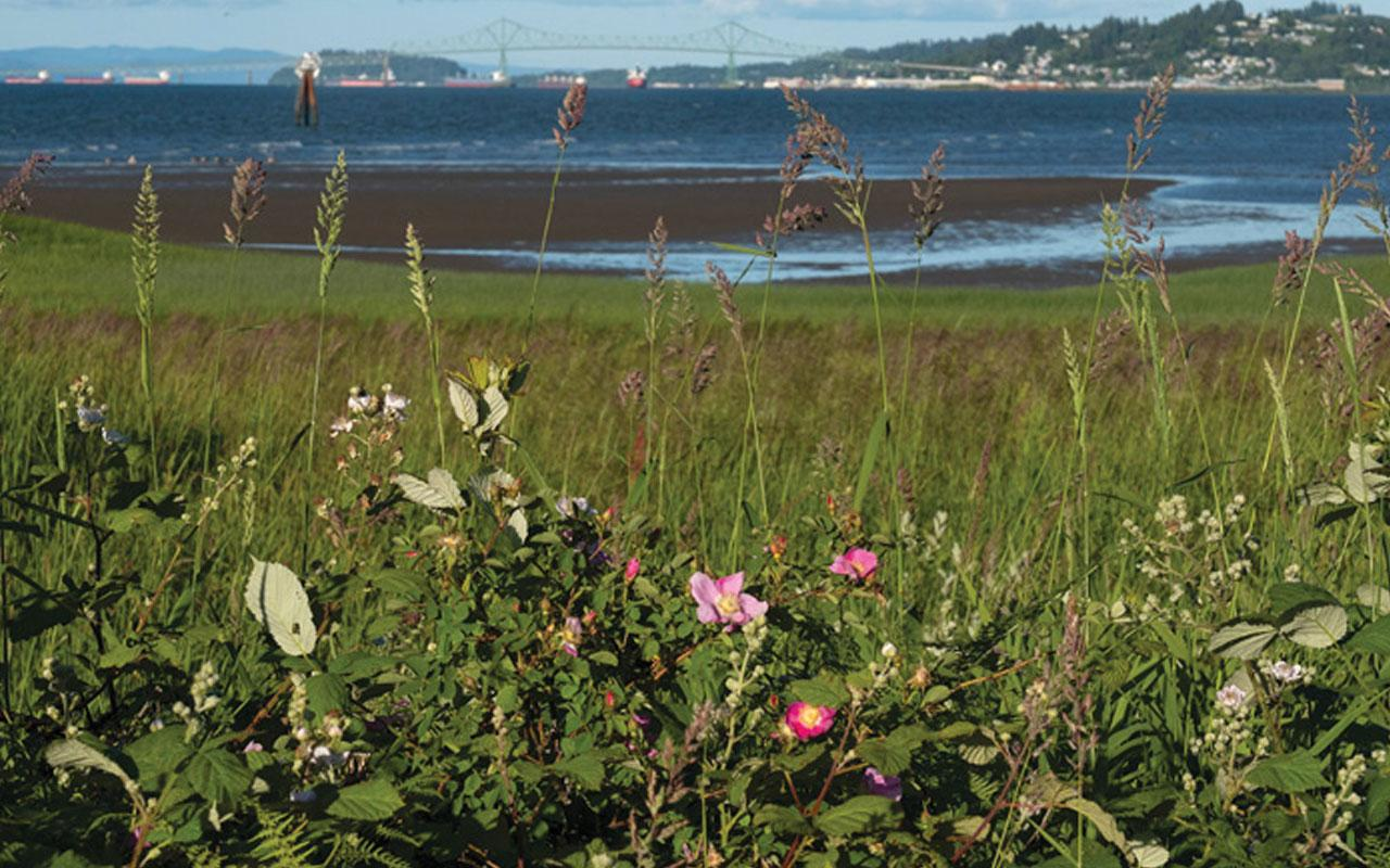 View of the Astoria-Megler bridge from the Tansy Point treaty grounds. Photo credit: Oregon Humanities